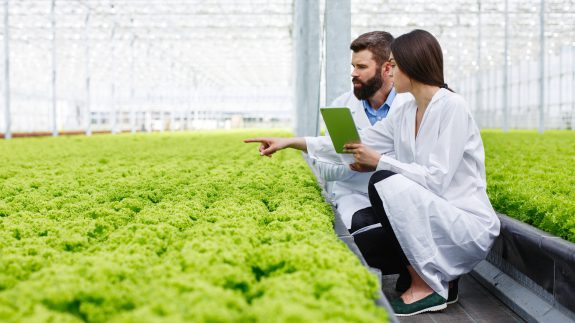 , How can R&D Tax Credits help the Agricultural sector?, Innovation Tax, Innovation Tax